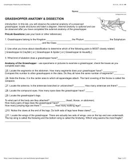 Grasshopper Dissection Worksheet Answers by Grasshopper Dissection Lab