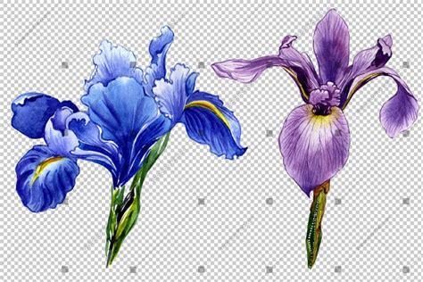 purple iris png watercolor flowers watercolorpng