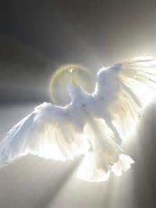 holy spirit sweet comfort to my soul 226 best dove of peace holy spirit images on pinterest