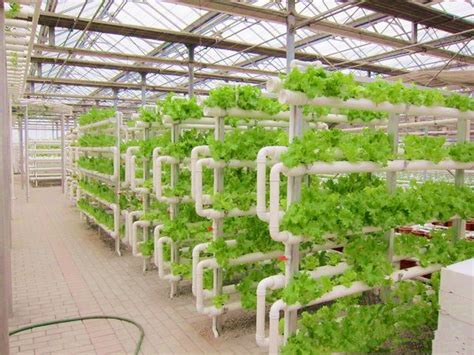 Pvc Pipe Hydroponic System For Lettuce Strawberry Herbs