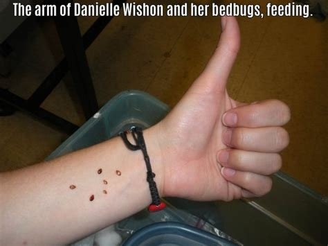 crazy things to do in bed 10 people who let bugs do weird things to them and we hate