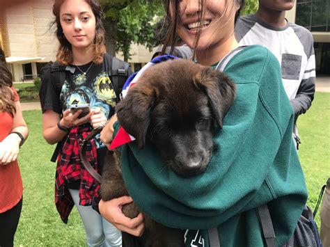 puppy palooza puppy palooza helps students