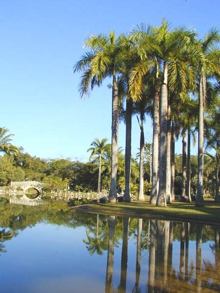 garden of palms
