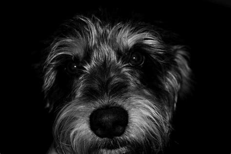 do dogs only see in black and white black and white animal photography www pixshark images galleries with a bite