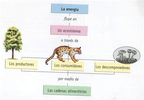 cadenas alimentarias para niños ejercicios interactivos flujo de energia cadenas