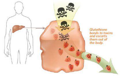 Glutathione Detox Symptoms by Milk Thistle Liver Detox How Silymarin Repairs