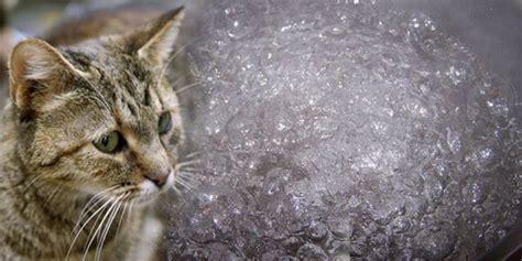 Obat Cacing Buat Kucing pria korea rebus 600 kucing buat curan obat