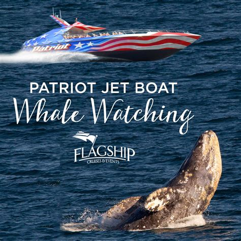 patriot jet boat whale watching patriot jet boat san diego reader