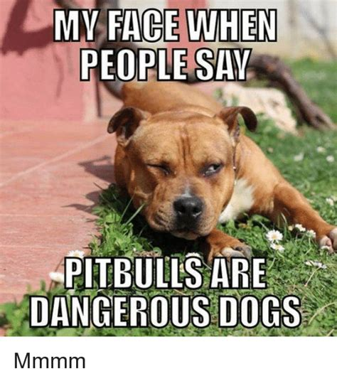 Serious Dog Meme - my face when people say pitbulls are dangerous dogs mmmm