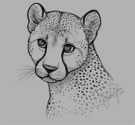 sketchbook cheetah pin cheetah drawing image search results on