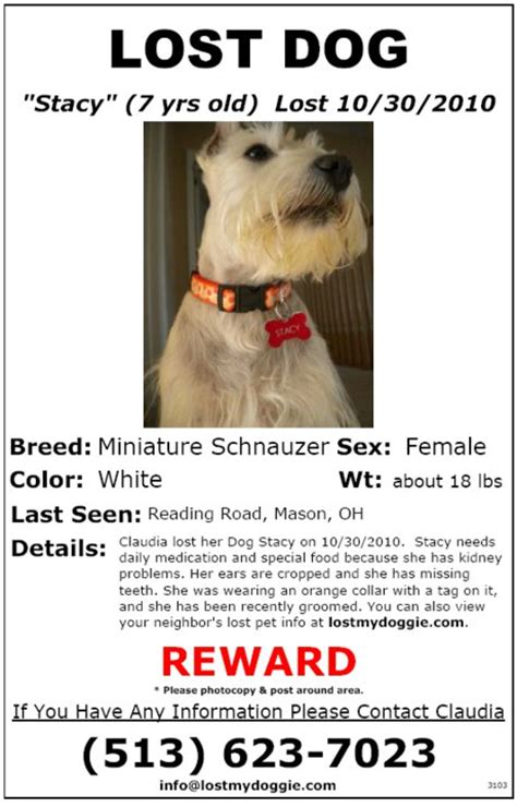 lost dog flyer template myrtle has been missing lost