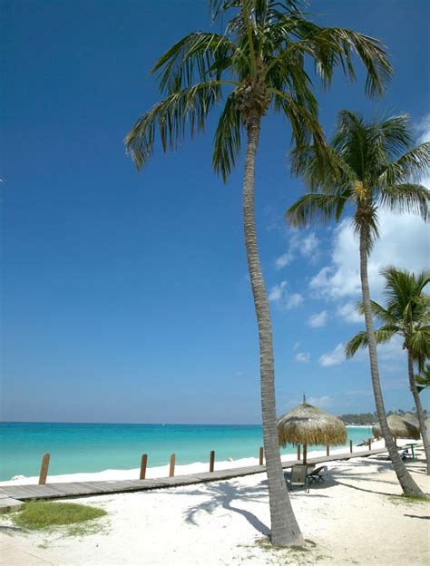 vacation suites in aruba palm beach aruba 2 bedroom suites 63 best life is better at the beach aruba images on