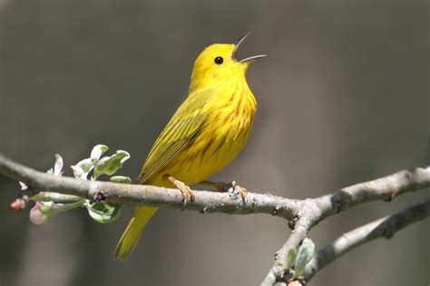 different types of birds that sing green limbs and singing birds 187 cityofagape