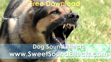 dogs barking sounds barking sound effects free