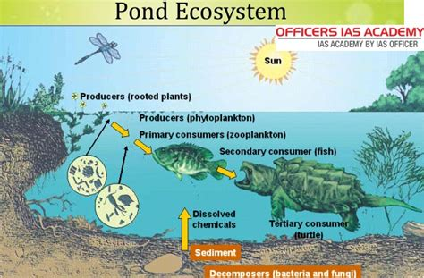 the biology of lakes and ponds biology of habitats series books pond ecosystem kullabs