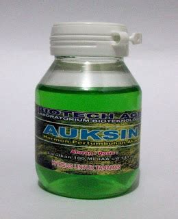 membuat zat pengatur tumbuh organik auksin zat pengatur tumbuh tani organik