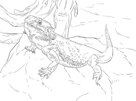 water dragon coloring page coloring pages water dragon printable for kids adults