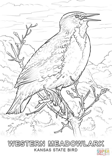 K State Coloring Pages by Kansas State Bird Coloring Page Free Printable Coloring