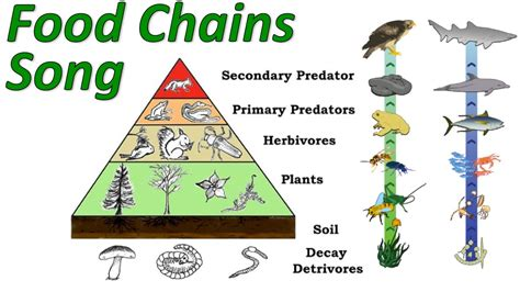 food webs on pinterest food chains science and food food chain welcome to science and mathematics world