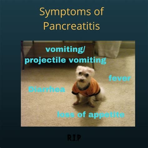 stomach flip symptoms pancreatitis in dogs caring for a senior