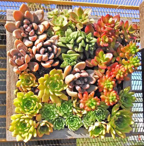 succulent wall panels cactus jungle