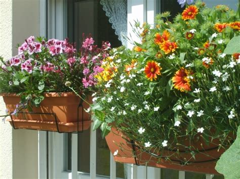 balcony flowers image balcony with flowers download