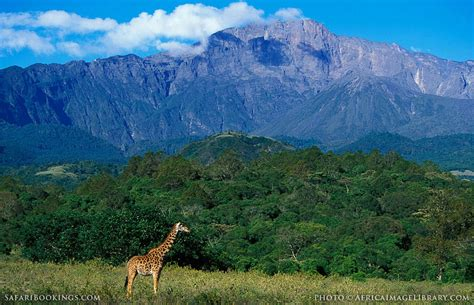 Arusha National Park ? Travel Guide, Map & More!