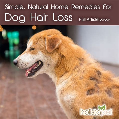 home remedys for dogs losing hair best 25 dog hair loss ideas on pinterest hair loss in