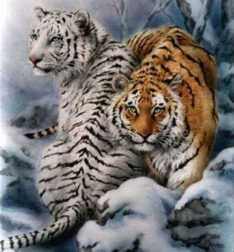 Tiger White white tiger images white tigers wallpaper and background