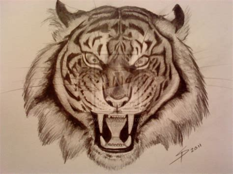 angry tiger eyes drawing