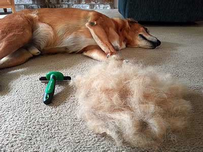 what is the best brush for shedding dogs top 15