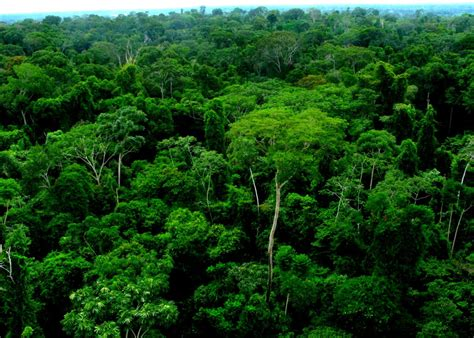 canopy amazon countless connections in peru s amazon rainforestoic