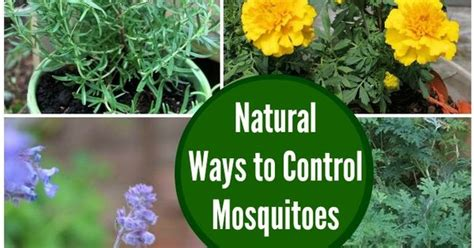 how to control mosquitoes in your backyard natural ways to control mosquitoes in your yard