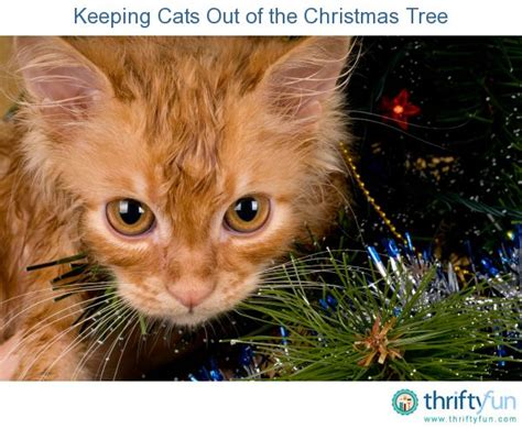How To Keep Cats Tree - 1000 images about gt
