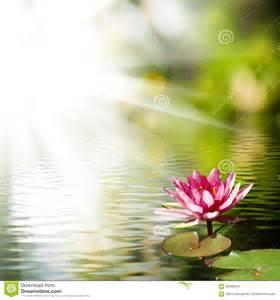 Wallpaper Lotus Flower Design Beautiful Lotus Flower Background Stock Photo Image