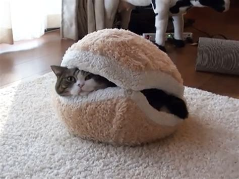 image gallery hamburger cat