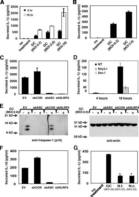 n proteinase neisseria gonorrhoeae activates the proteinase cathepsin b
