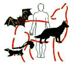 imagenes de vectores que transmiten enfermedades rabia zoonosis y vectores