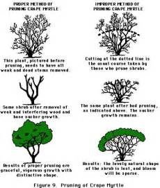 pruning maintaining shrubs and trees