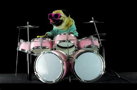 pug panting for no reason pug tallica plays quot enter sandman quot