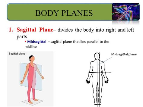 a section that divides the body into left and right organization of the human body ppt video online download