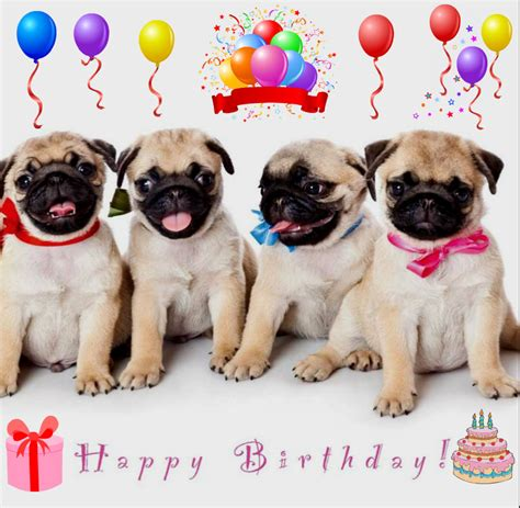 Birthday Pug Meme - happy birthday sister pug meme google search pugs