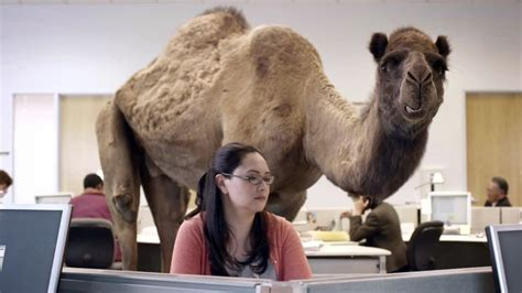 geico commercial actress million bucks spanengrish ramblings annoying camel geico commericals