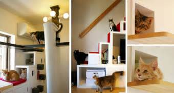 Cat Friendly Home Design by Another Amazing Cat Friendly House Design From Japan
