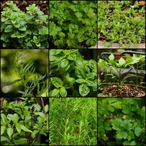 Garden Plants Chimichurri Skirt Steak Magnolia Days