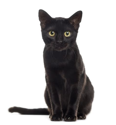 black xat stop hating on black cats it s national black cat day