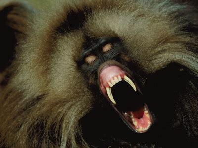 top  herbivores     avoid listverse