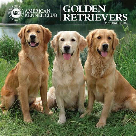 golden retriever club golden retrievers american kennel club 2018 wall calendar