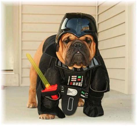 dogs  star wars costumes darth vader yoda ewok