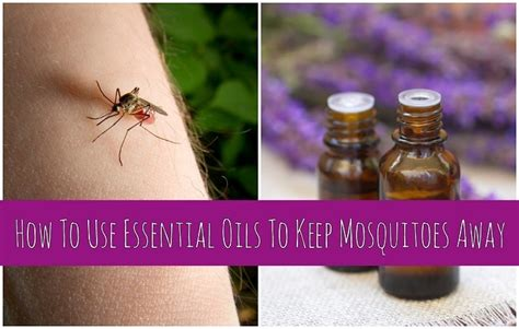 using essential oils against mosquitoes and flies gnats etc and